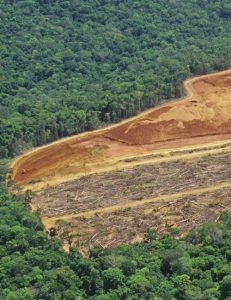 Nestle Cracks Down on Deforestation