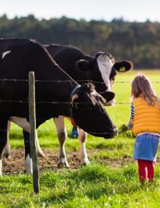 GPS-Based Livestock Management