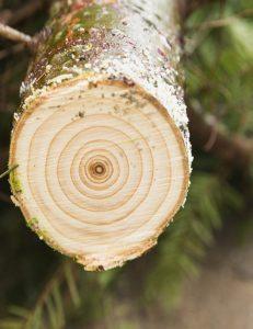 Oh Christmas Tree… Prices